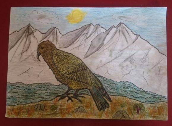 Ben Cave's winning kea picture.