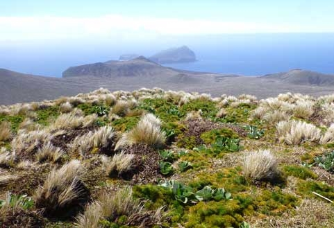 Blog: Eradicating mice from Antipodes Island