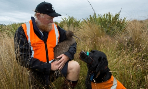 Hugh Robertson with Labrador Cara, a species dog trained to find kiwi. Photograph © Sabine Bernet.