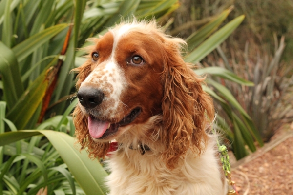 Blog: Dogs with conservation jobs