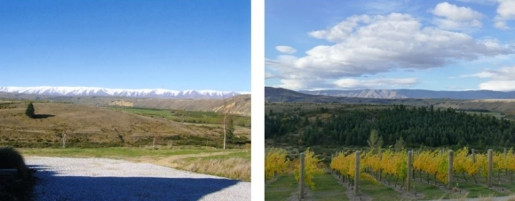 One single tree's wildings at St Bathans—ten years apart.
