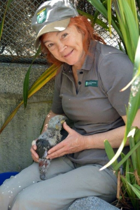 Sanctuary Ranger, Catherine Brimecombe with one of the chicks.