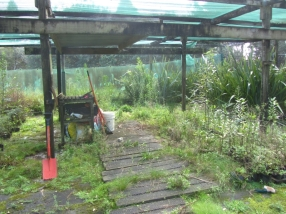 Trounson Kauri Park nursery before the clean up.