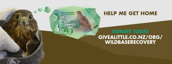 Donate to Wildbase Recovery.