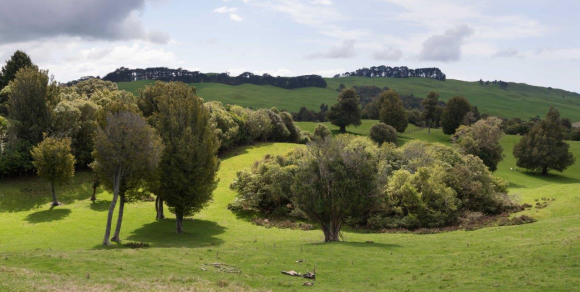 A farm bordering native bush within the Cape to City footprint. Photo: Lauren Buchholz.