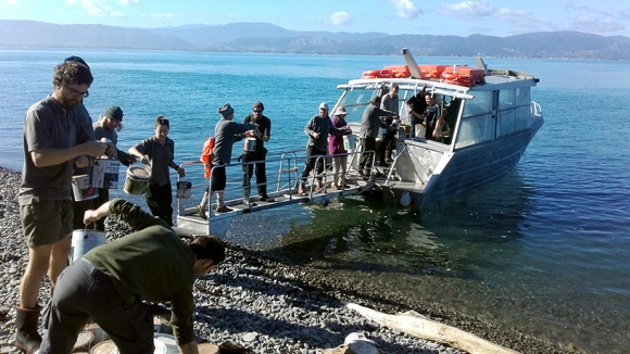 A human chain of staff and volunteers transfers gear off Kāpiti Island. Photo: Emma Dunning.