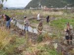 Volunteers hard at work planting newly excavated banks.