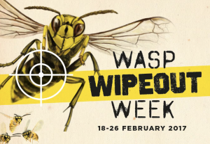 Wasp-wipeout-week-Feb-17