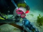 Diving in Taputeranga Marine Reserve.