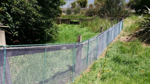 Portable fence panels at the takahē enclosure Park, Te Anau Bird Sanctuary. Photo: Catherine Brimecombe.