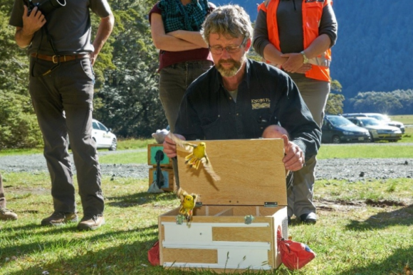 One of the OCF translocation boxes used to release mohua into the Eglinton Valley. Photo: Graham Dainty.