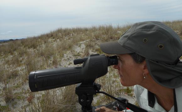 Sarah keeping an eye on the fairy terns.