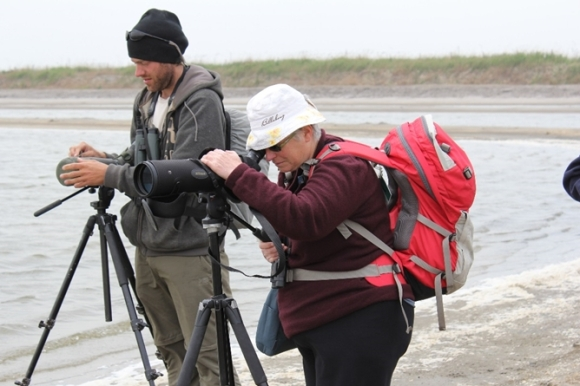 Carol West looking at red knots on the Luannan wetlands. Photo: Bruce McKinlay.