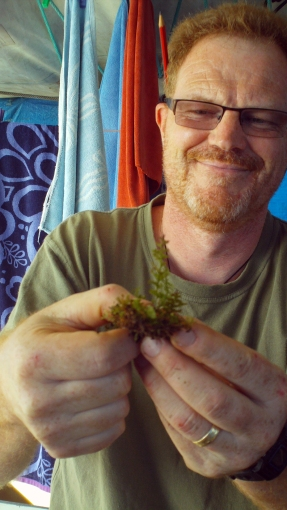 Peter de Lange holding up Hymenophyllum specimen from Prospect Peak 17 May 2011