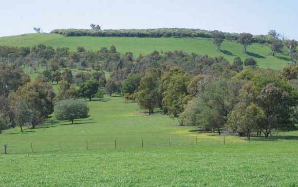 A 15-year old direct seeded paddock which had livestock returned 5 years after seeding. Photo: Sue Streatfield.
