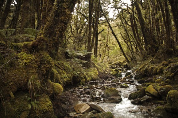 Creek along Croesus Track. Photo: Baptiste Maryns ©.