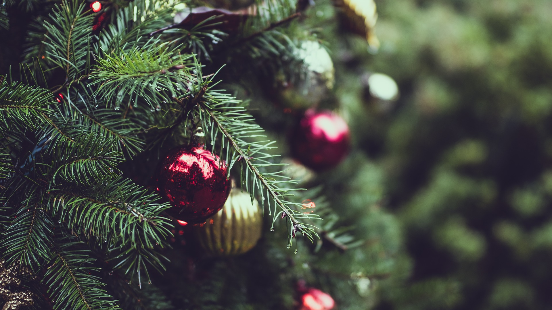 Blog: Rocking around the Christmas weed