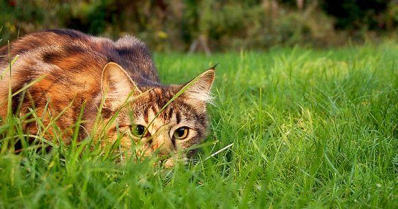 Cat. Photo: Jennifer Barnard.