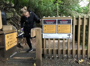 kauri-cleaning-station