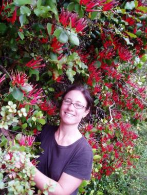 Senior ranger Fiona admiring a healthy plant of scarlet mistletoe. Photo: DOC