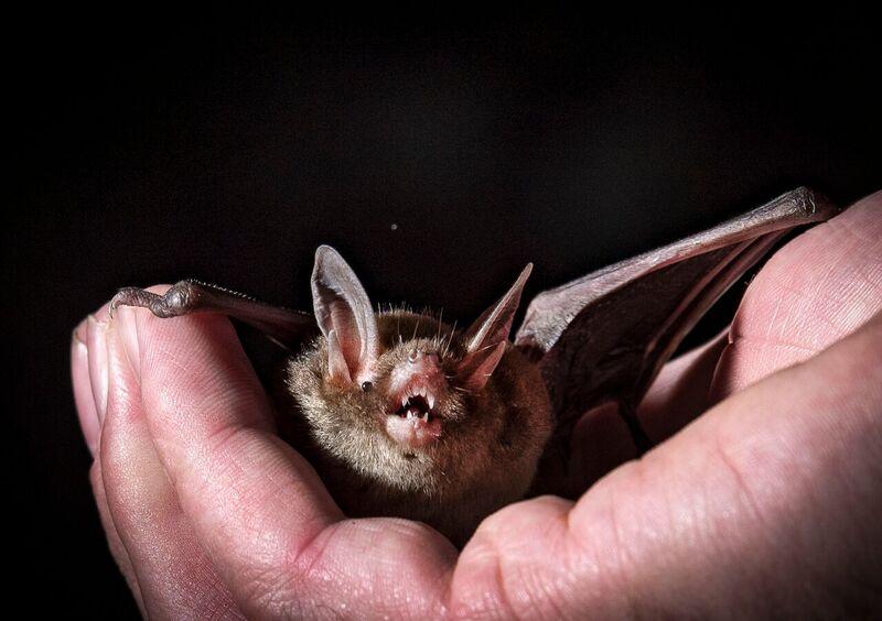 Blog: Monitoring bats in Whirinaki