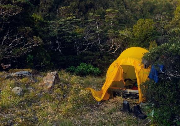 Fiordland Kiwi Diaries: Nest check for Pegleg and Sinbad Colby