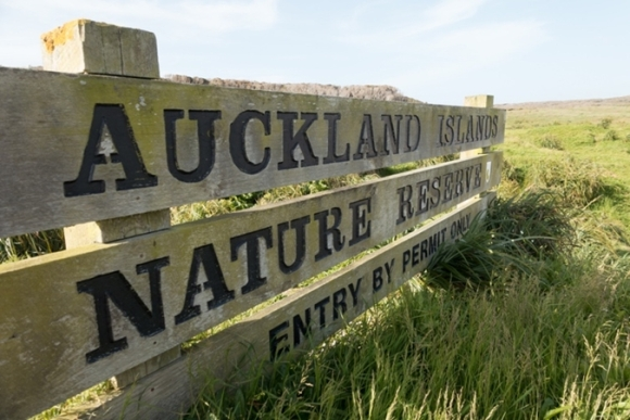 Welcome to Enderby Island, part of the Auckland Islands .