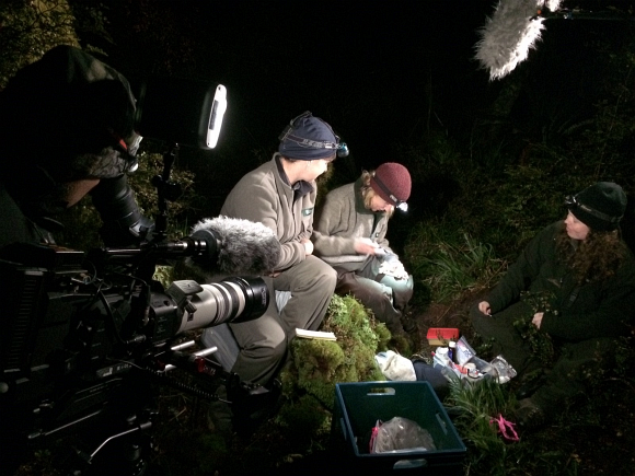 Fitting a transmitter to a short-tailed bat during filming.
