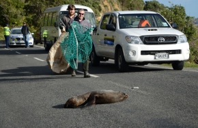 Seal on the road.