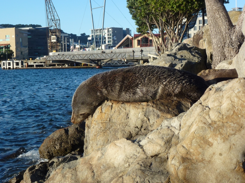 Seals need rest not rescuing