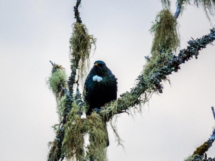 Protecting threatened species in Paengaroa