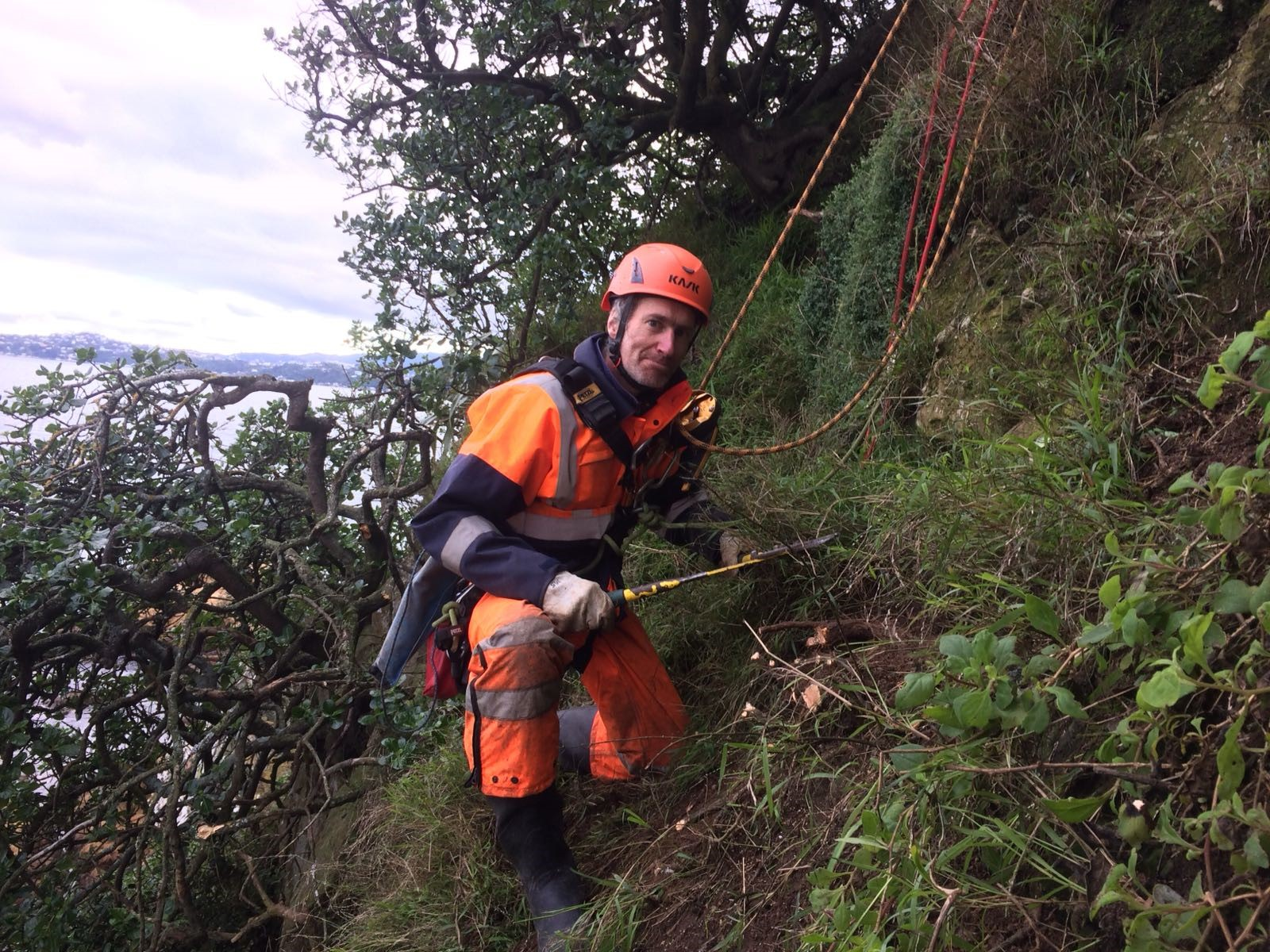 Warding off the weeds on Mākaro island