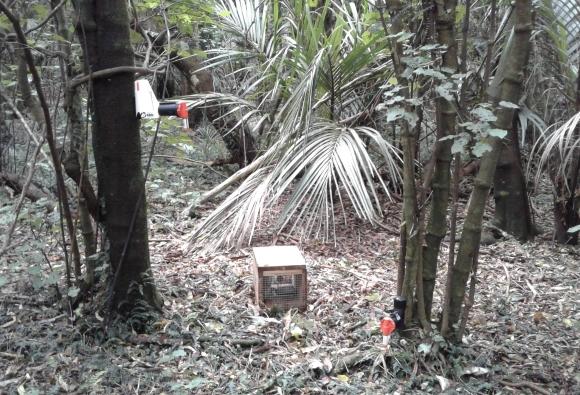 An A12 possum trap, a DOC 200 stoat trap and an A24 rat trap.