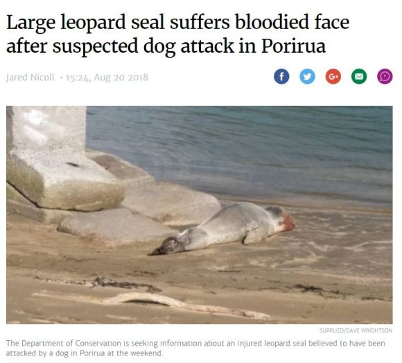 Article on dog attack from August 2018. Photo: Stuff.co.nz