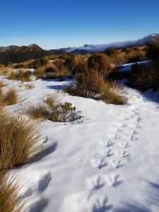 Prints in the snow. 📷: Bridget Railton.