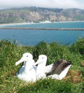 Keeping company at the start of a breeding season