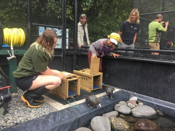 First ducks into aviary
